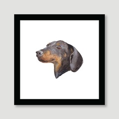 Dog - Dachshund