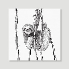 Animal - Sloth