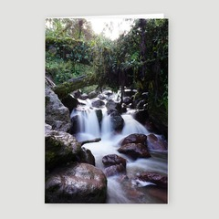 Small Stream on the Jungle